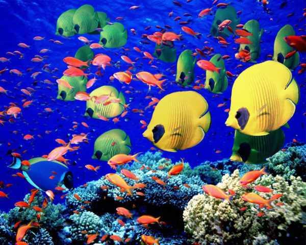 Подводный мир Персидского залива