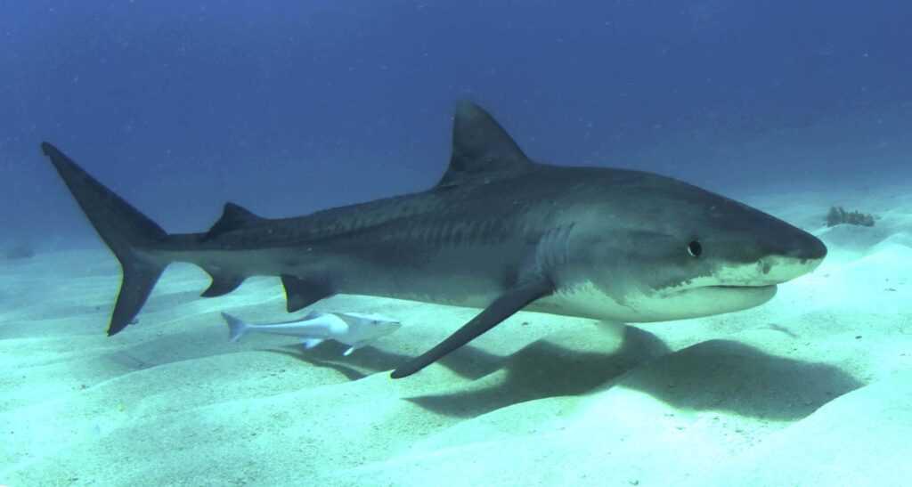 есть акулы в Черном море?